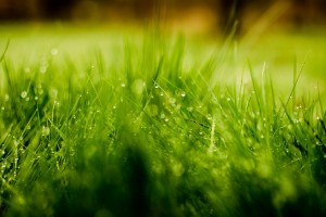 grass dew drops cute romantic