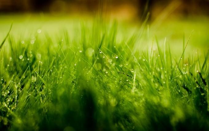 grass dew drops cute romantic