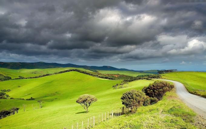 grass wallpaper countryside