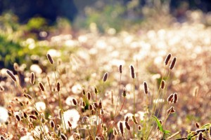 grass wallpaper meadow