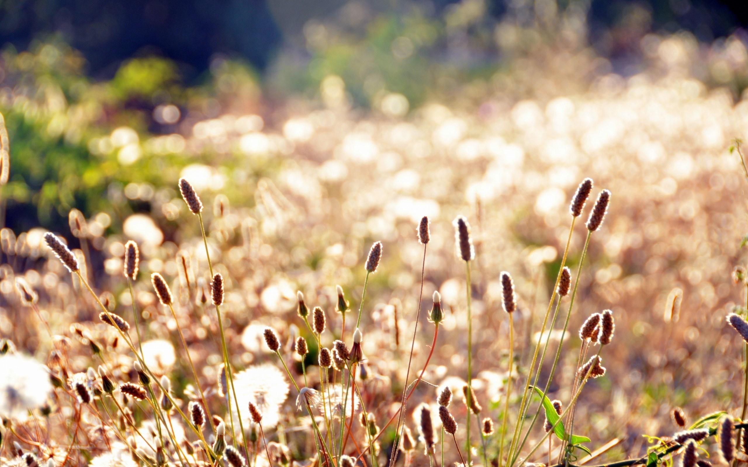 grass wallpaper meadow