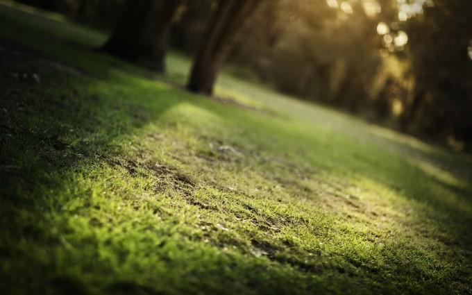 grass wallpaper photography hd
