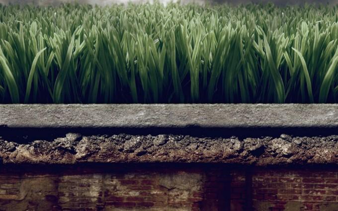 grass wallpaper splendid