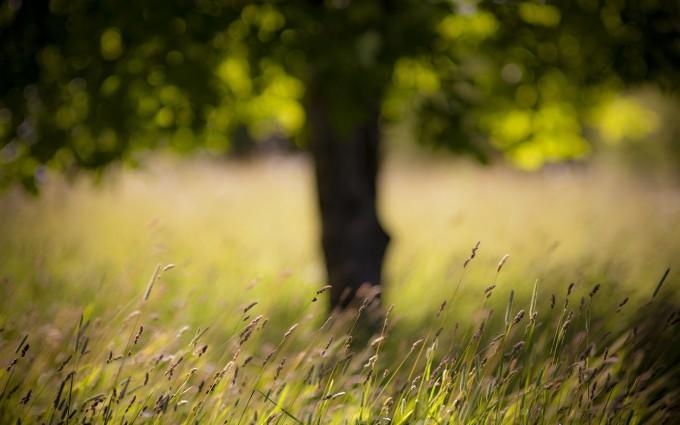 grass wallpaper summer hd