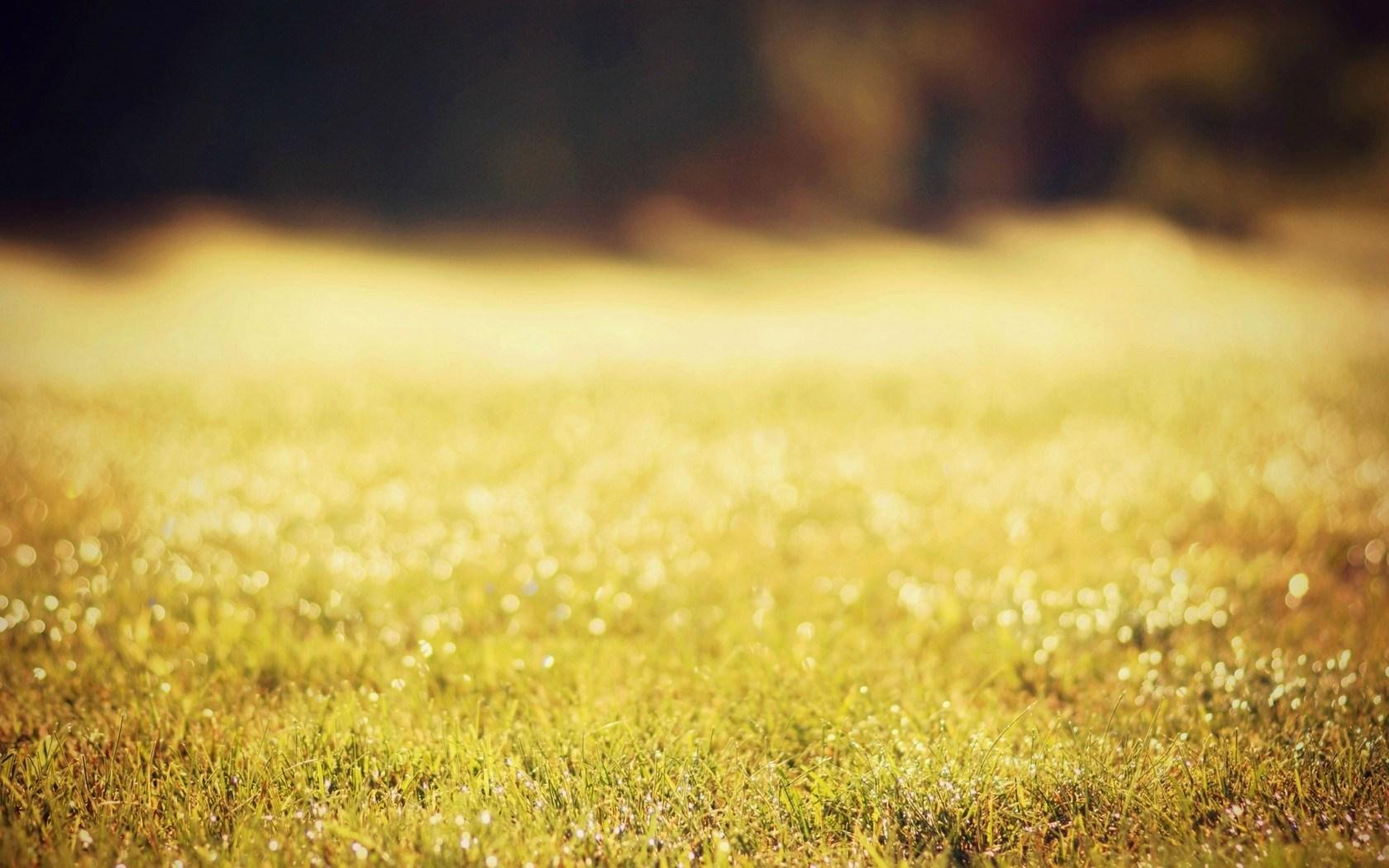 grass wallpaper summer nature