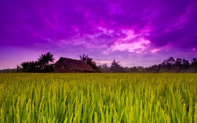 green field background download