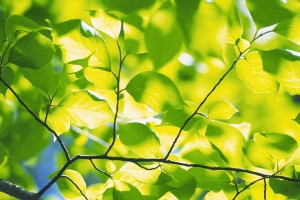 green foliage leaves hd