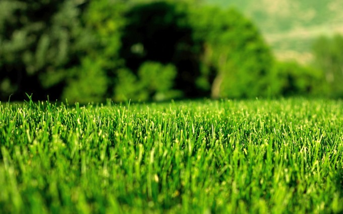 green lawn wallpaper