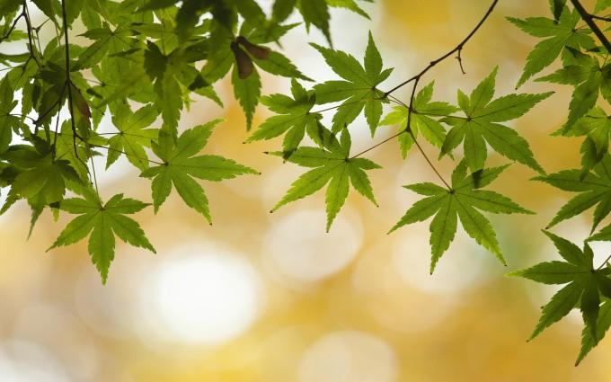 green leaves mobile