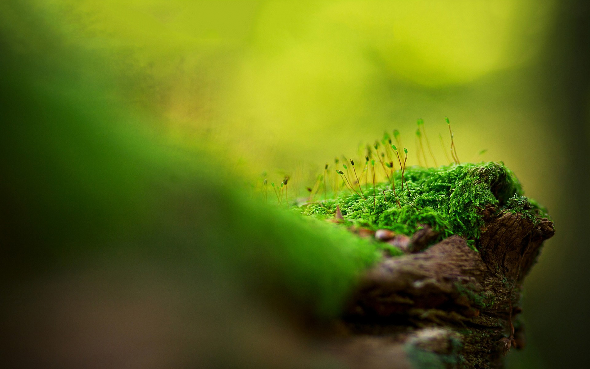 green moss images
