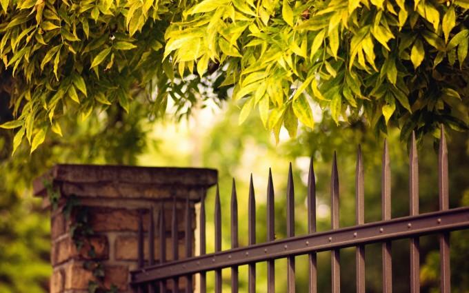 green nature photos