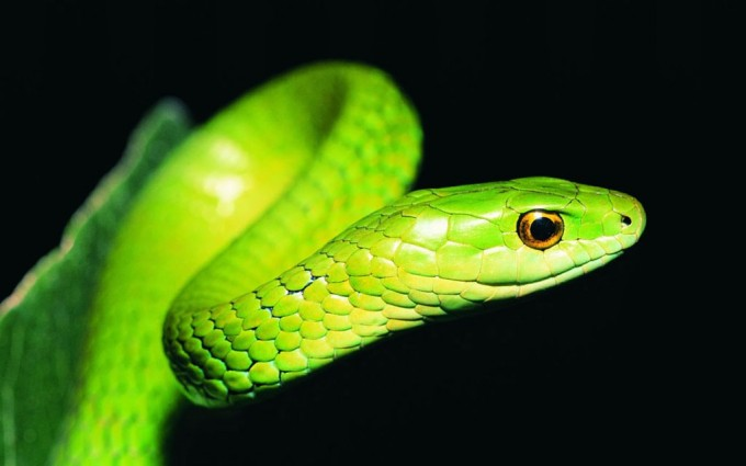 green snake pictures