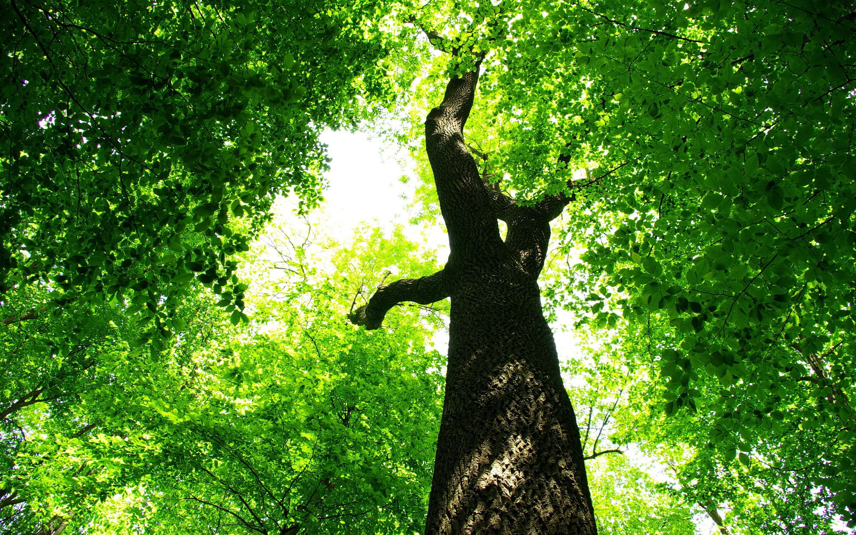 green tree jungle