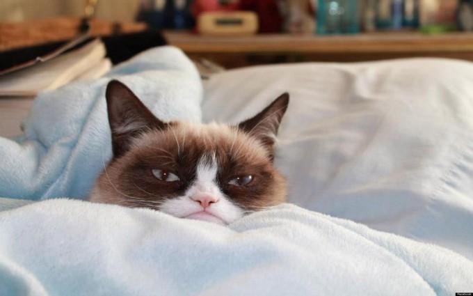 grumpy cat hd