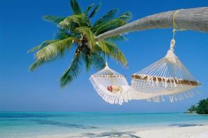 hammock palm tree