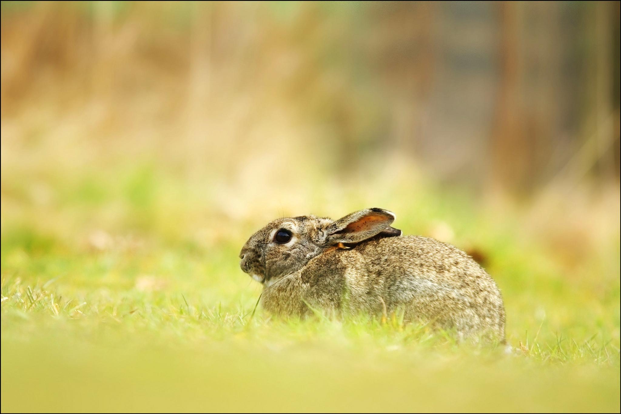 hare cute