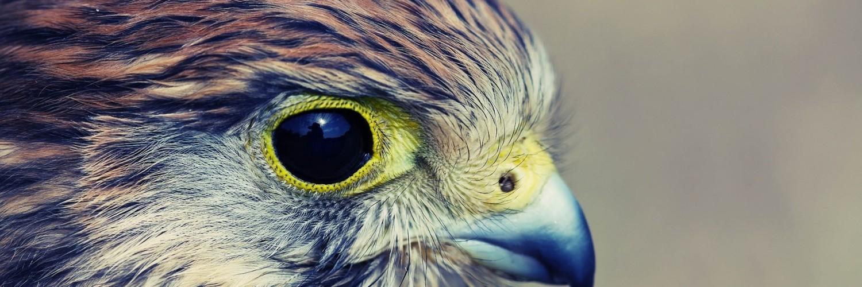 hawk hd wallpaper - photo #33