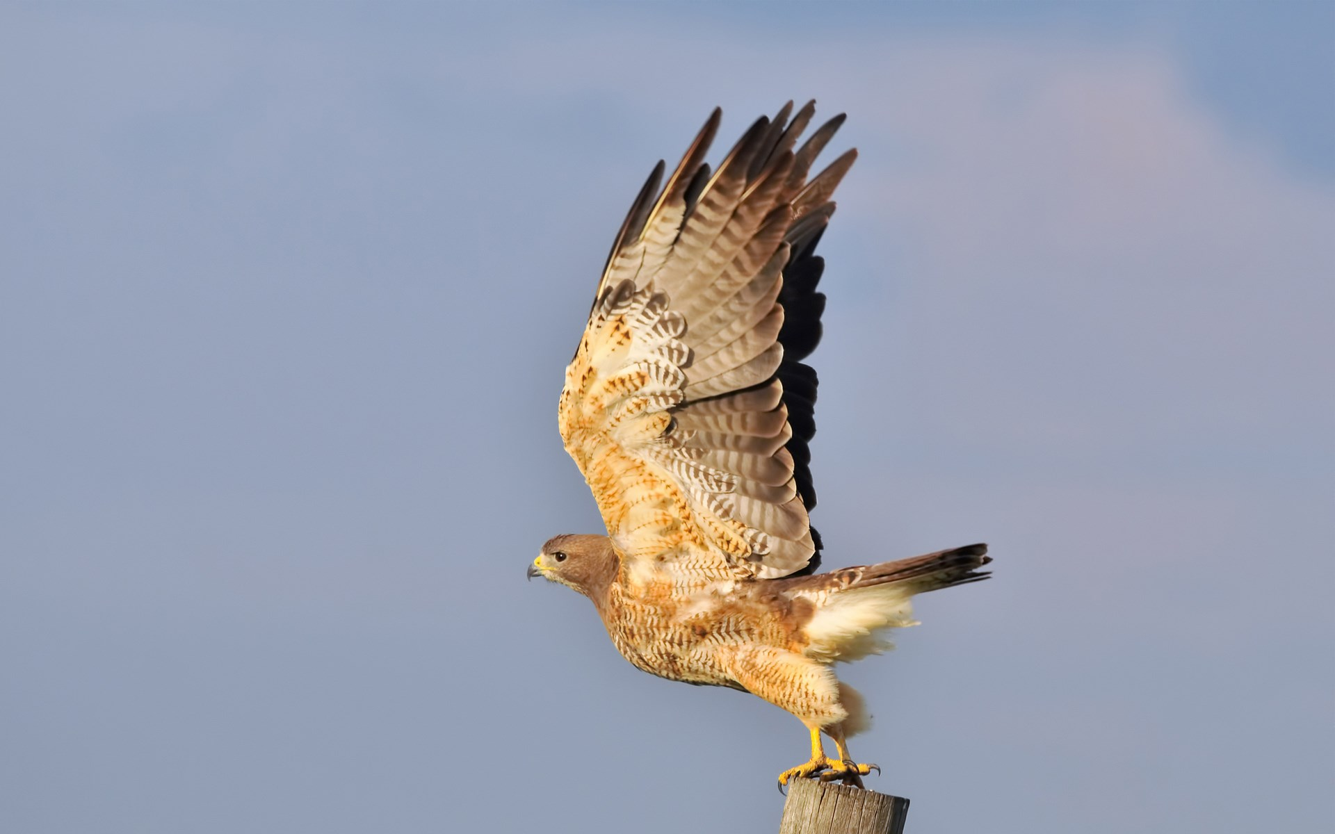 Cool hawk pictures