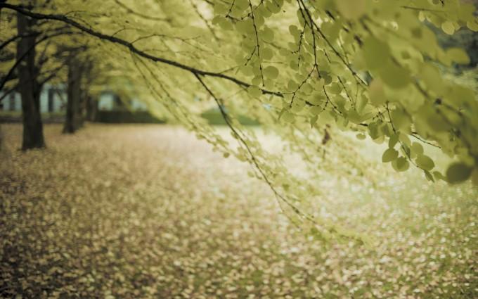hd autumn images