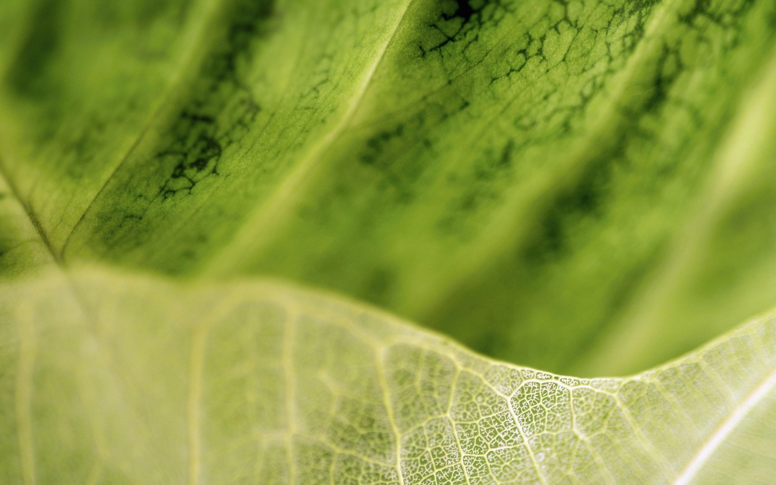 hd leaf wallpaper
