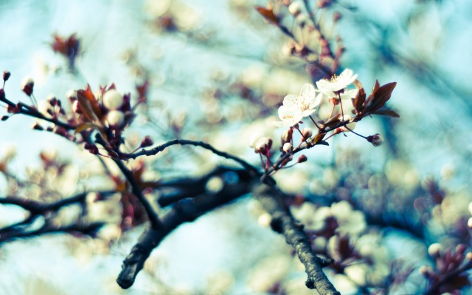 hd spring wallpapers