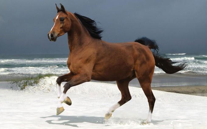 horse beach cute