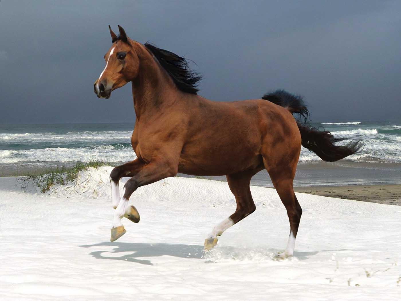 horse beach