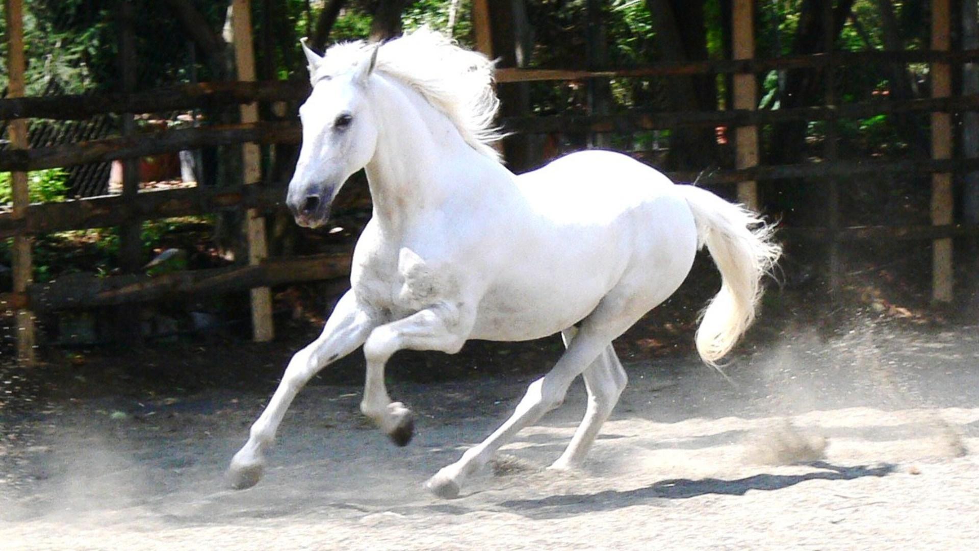 horse happy