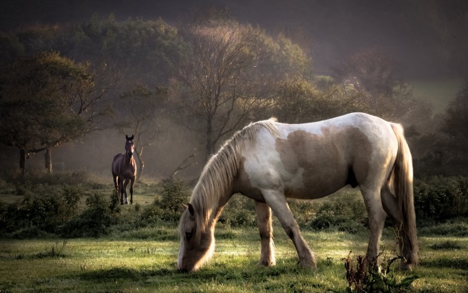 horse images nature