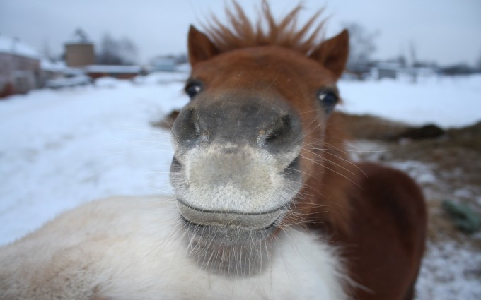 horse kiss wallpaper
