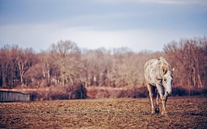 horse nature wallpaper