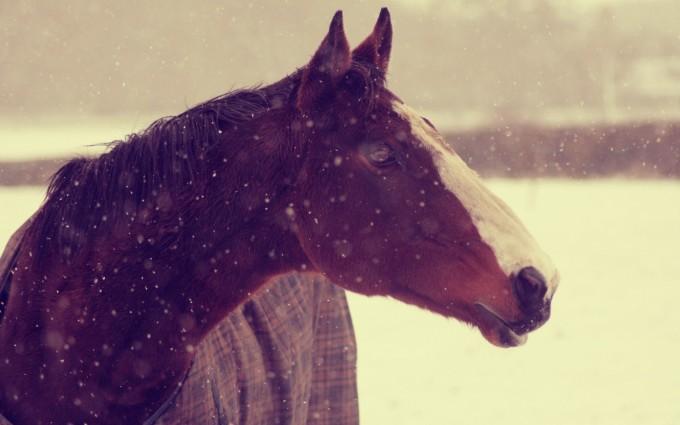 horse winter hd