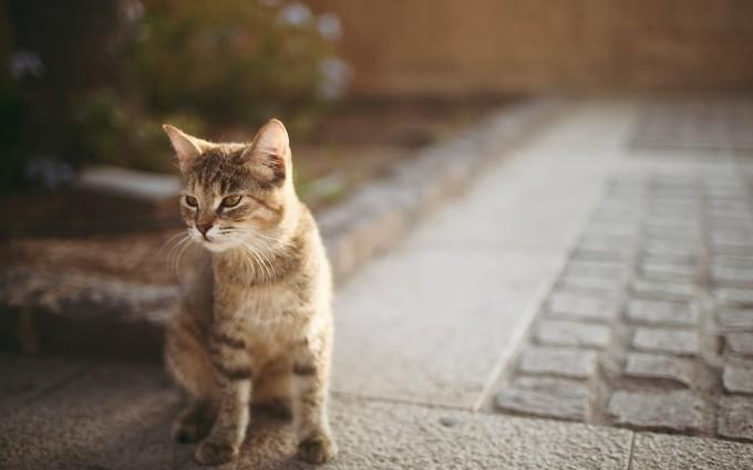 kitten curious wallpaper