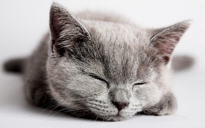 kitten cute adorable