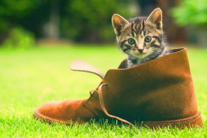 kitten cute wallpaper shoe