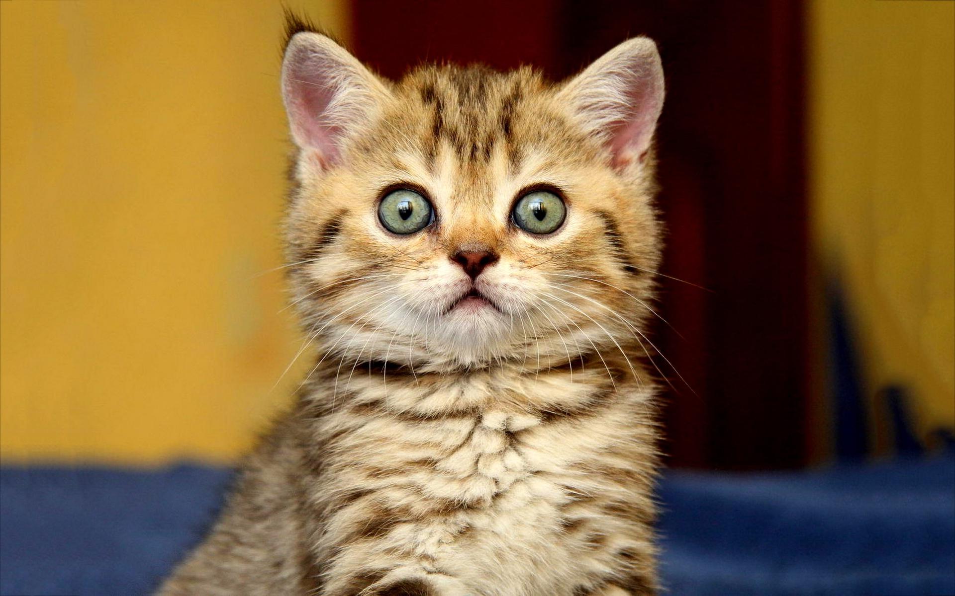 kitten eyes funny
