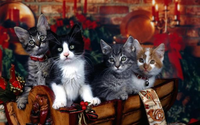 kitten family wallpapers