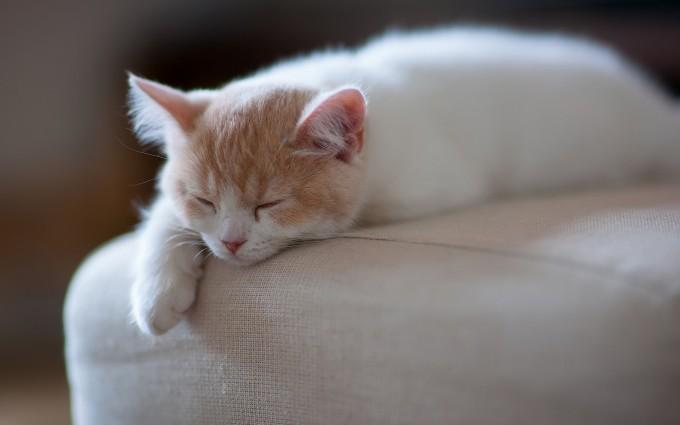 kitten pc hd