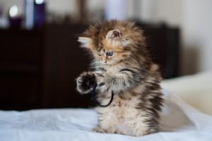 kitten playing lovely
