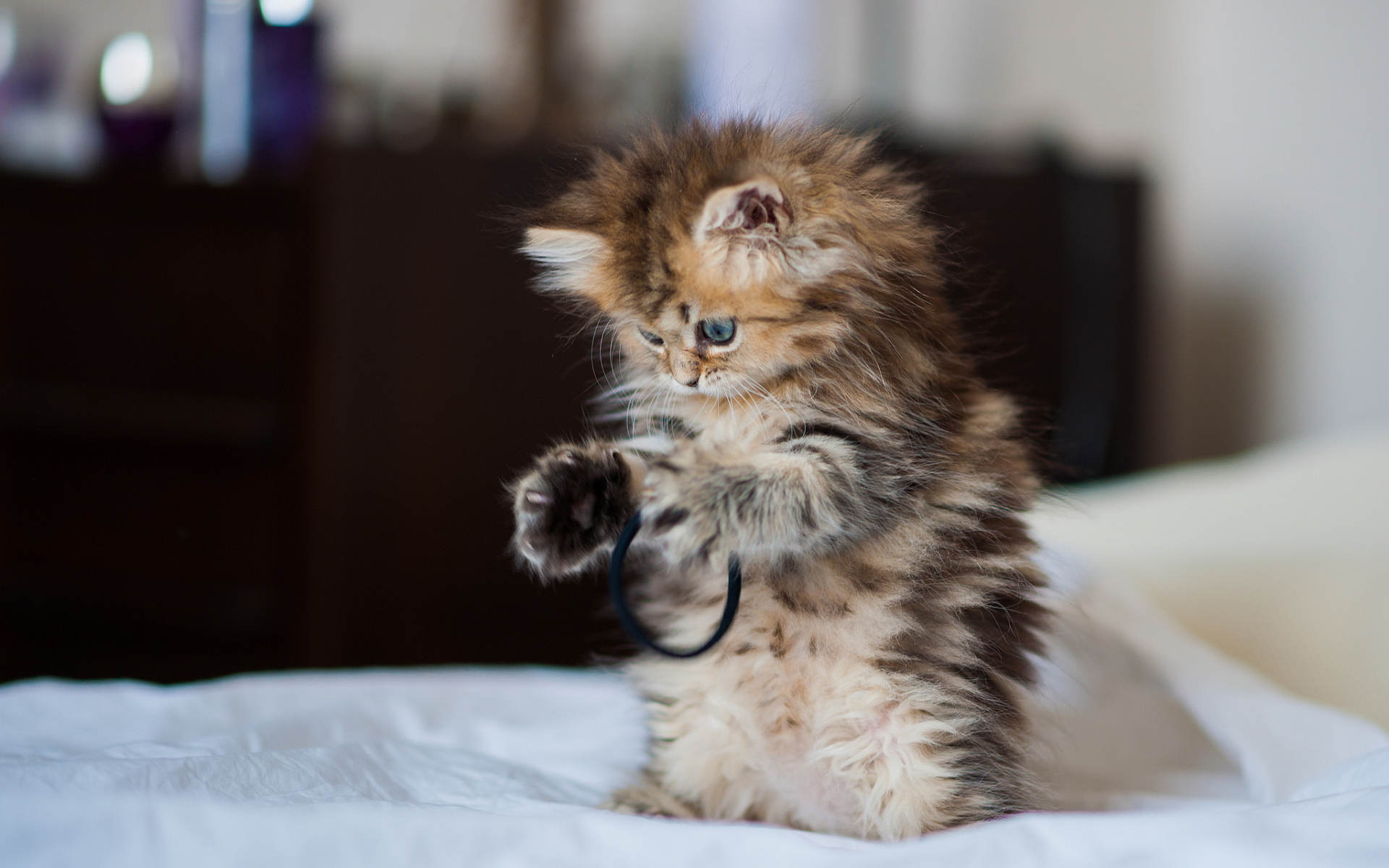 kitten playing lovely