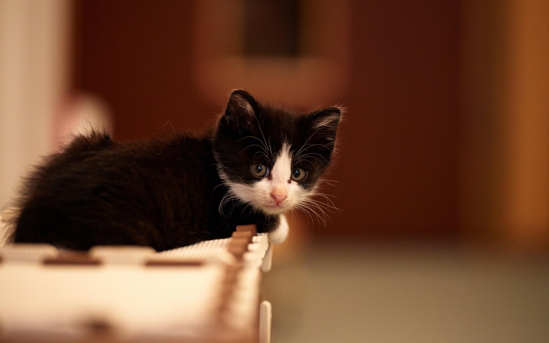 kitten small