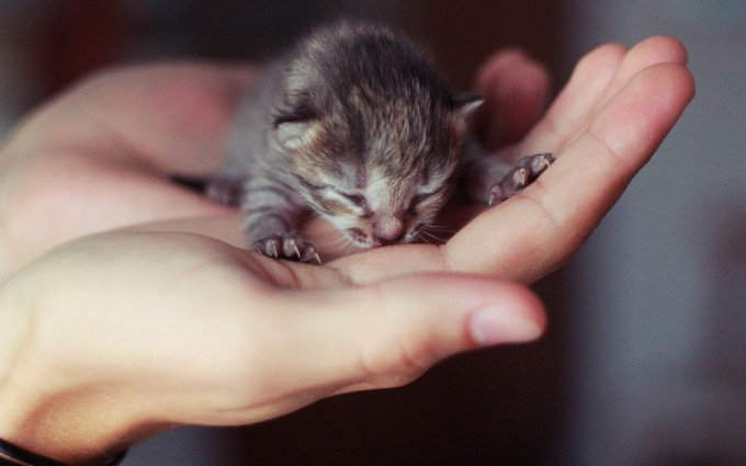kitten very cute images