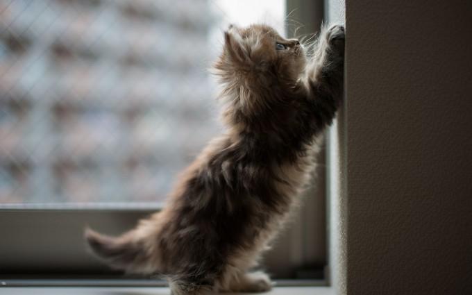 kitten wall background
