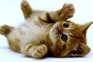 kitten wallpapers download