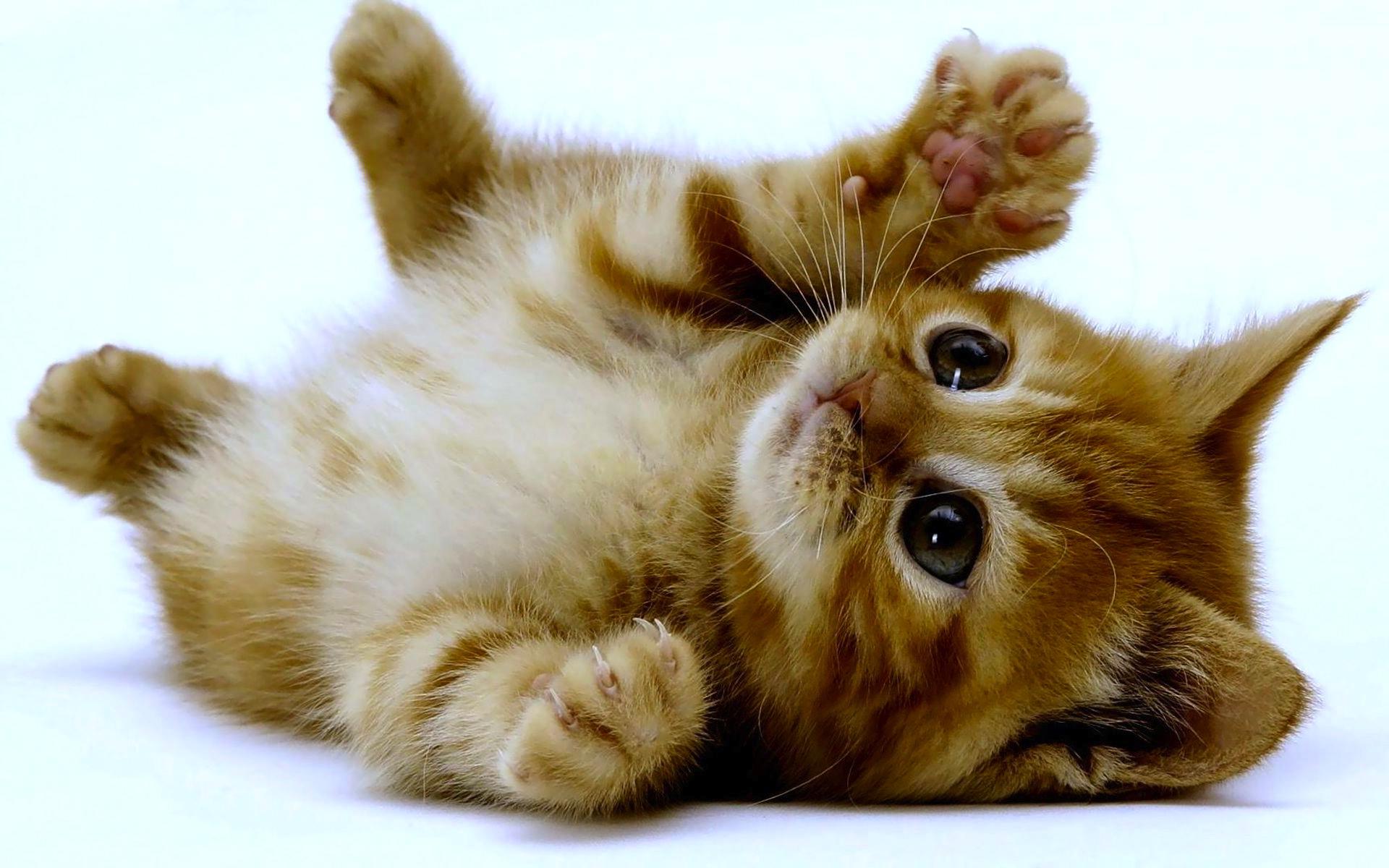 kitten wallpapers download