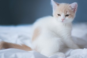 kitten white cute