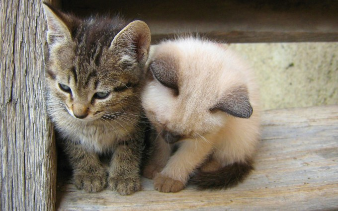 kittens cute images