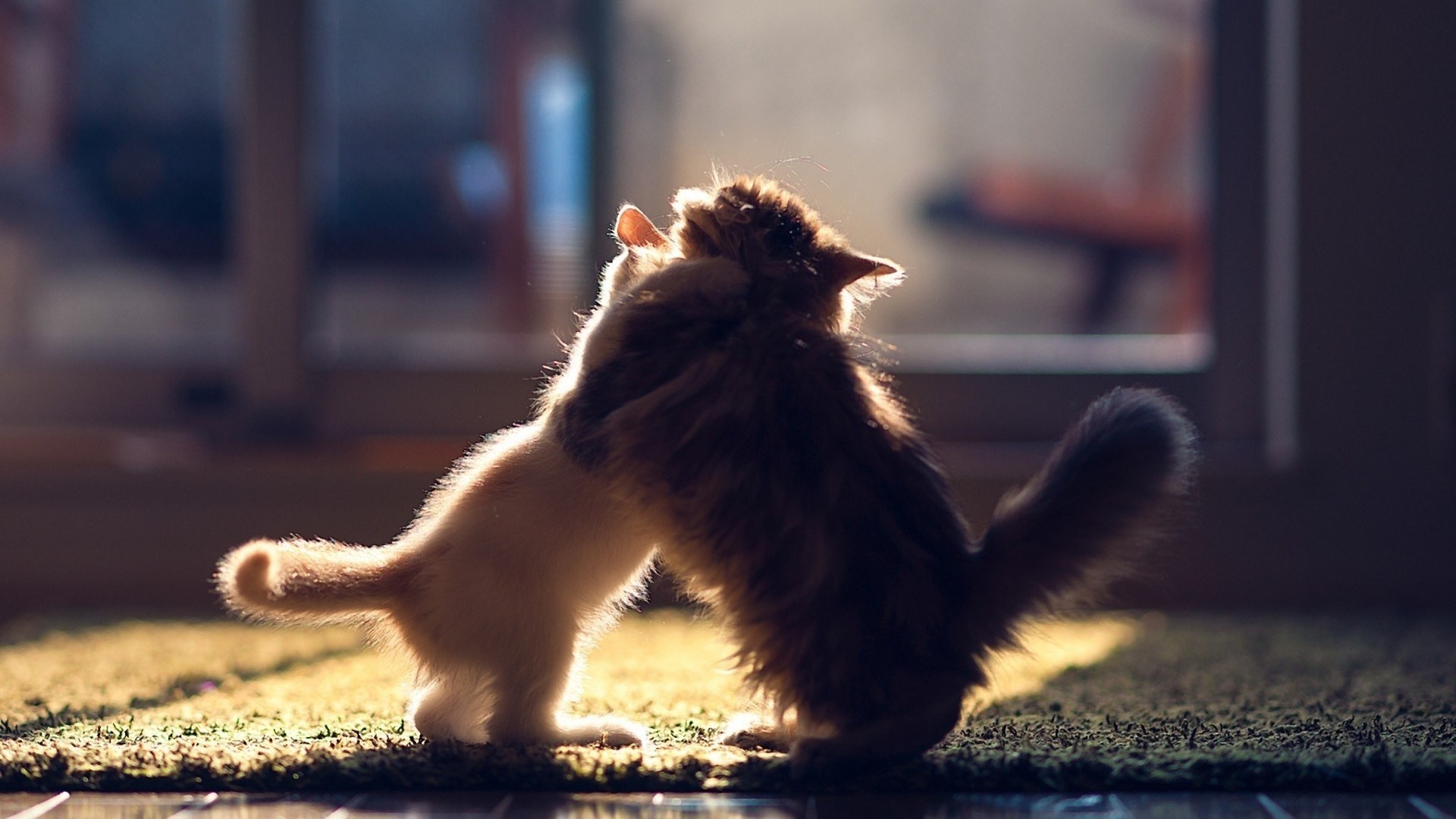 kittens playful