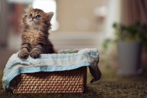 kitty basket