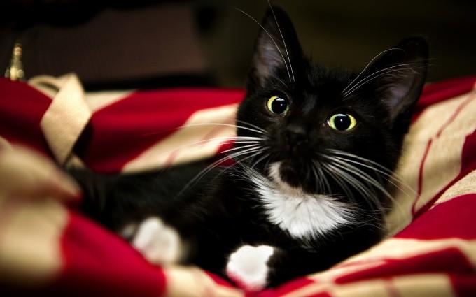 kitty black wallpaper